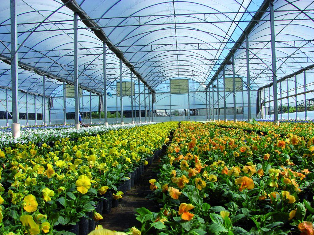 Pl stico para invernadero Plantas de invernadero