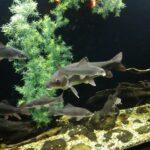 Tipos de acuario marino